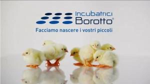 617673_3_._borotto